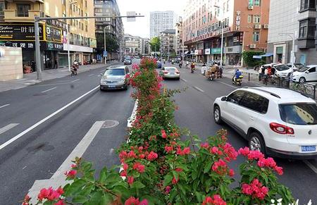 福州更多街巷将变身花街 仙塔街呈现三角梅景观