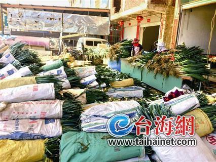 漳浦大葱滞销严重 葱农:不少已烂在地里