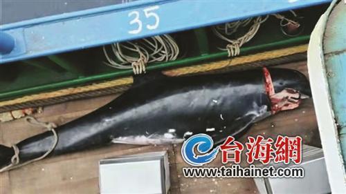 殘殺5只海豚取牙3人獲刑