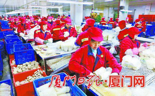 如意情集团金针菇生产基地。(资料图/朱毅力摄)