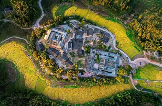 稻田环绕的福州永泰竹头寨。 陈成才 摄