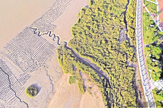 泉州水线公园滨海园邻水慢道
