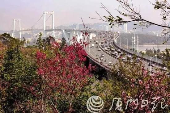 图片来源:厦门旅发委