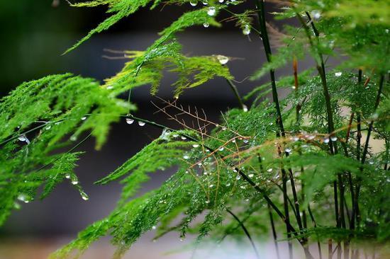《水滴?#28210;瘛?#31069;大家元宵节快乐!19 日摄于东浦?#20223;?#39030;花园。刘海英 摄