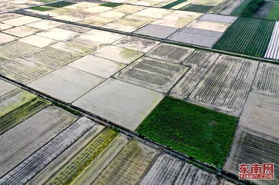 康庄村耕地面积3260亩。(邱枫 摄)