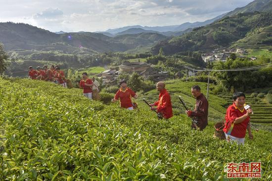 在南靖县书洋镇枫林村高山茶园上,村民和游客自编自导采茶歌曲。