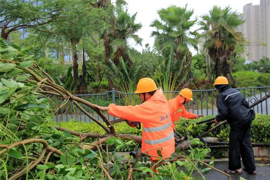 """台风过后迅速恢复如初 这就是""""翔安速度"""""""
