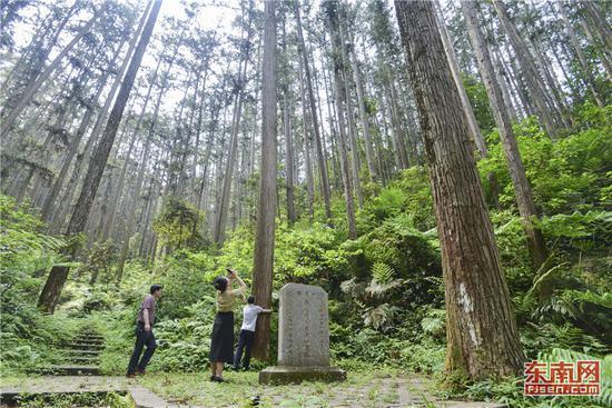 溪后村的杉木丰产林 黄海 摄