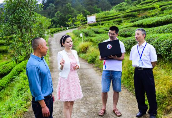 探访5G+智慧生态茶园