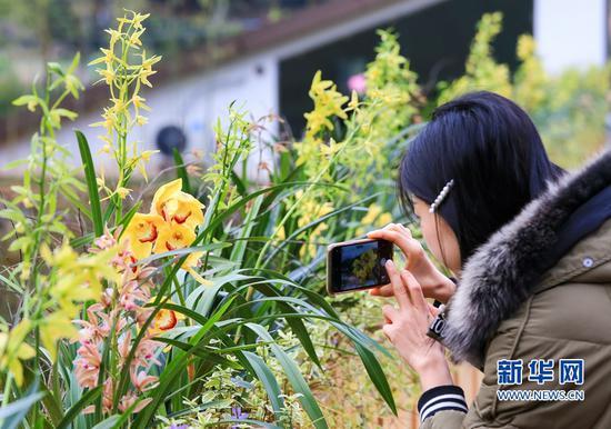 一名女士用手机拍摄兰花(3月8日摄)。