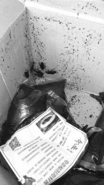 过期原料上爬满蟑螂。