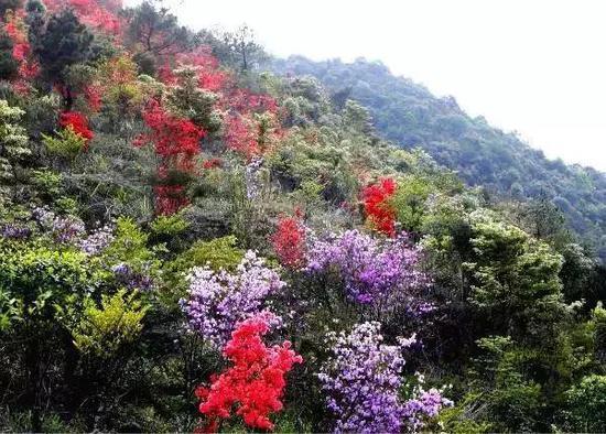 图片来源:漳州市旅游发展委员会