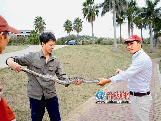 ▲秦先生(右)和蟒蛇