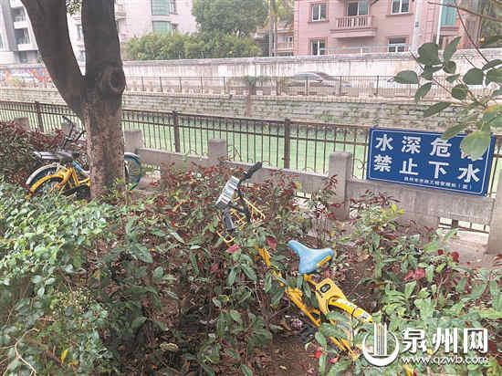 共享单车废弃在绿化带中 (魏婧琳 摄)