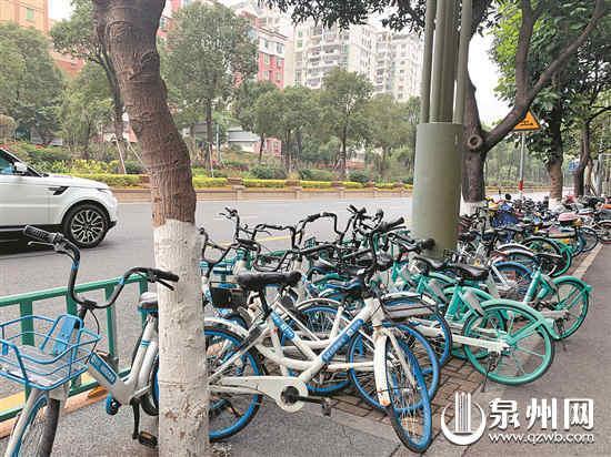 市区刺桐路上无序停放的共享单车 (魏婧琳 摄)