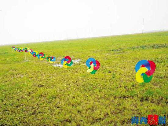 驱鸟神器之彩色风轮。