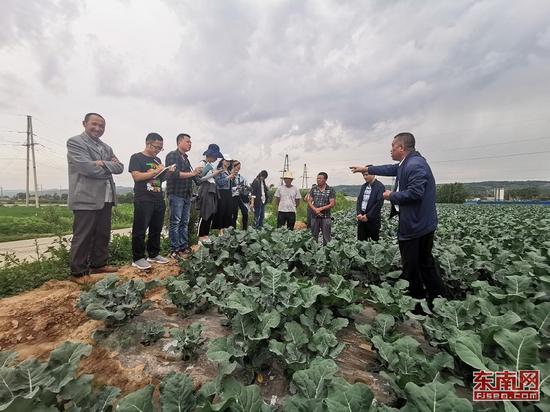 思明新媒体一行走访临夏苗家村高原夏菜生产基地。(东南网记者 卢超颖 摄)
