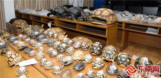 三明警方破获一起特大非法出售野生动物及其制品案