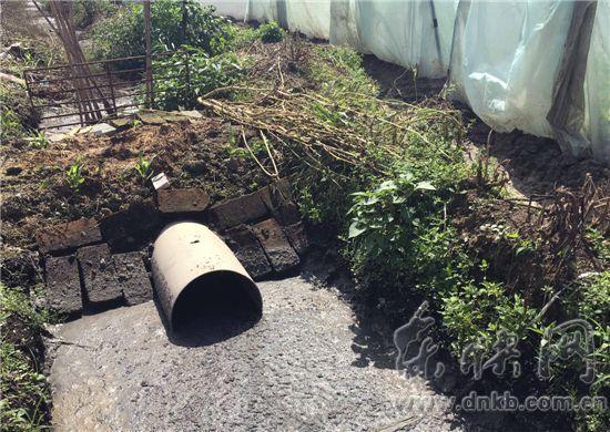 上街供水厂旁现养猪场 地下水粪大肠菌严重超标