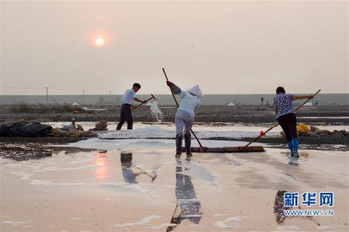   8月6日,山腰盐场的盐工在晨曦中劳作。新华社记者 姜克红 摄