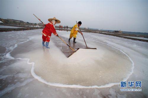   8月6日,山腰盐场的盐工在用传统的盐耙扒收海盐。