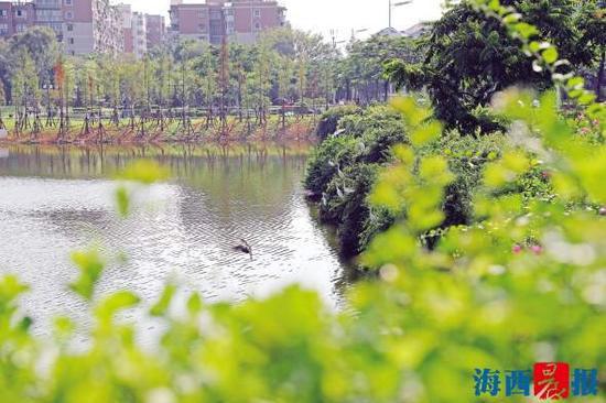 水塘景观改造工程主体完工,鸟儿频频造访。记者陈理杰摄