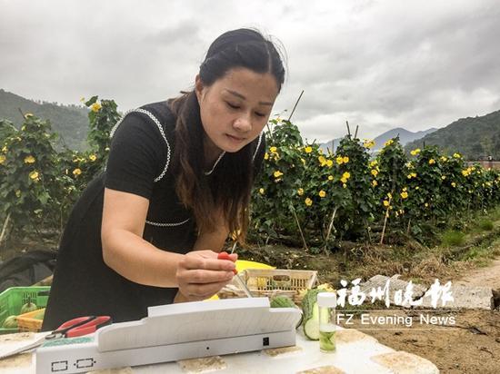 郑惠平对刚采摘下来的丝瓜进行检测。
