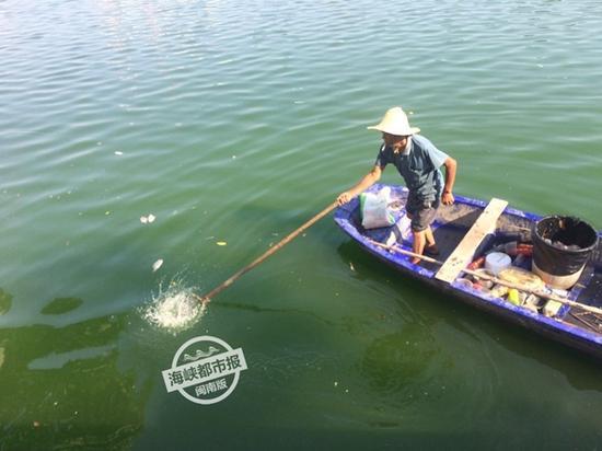 泉州市区浦西滞洪区又现死鱼