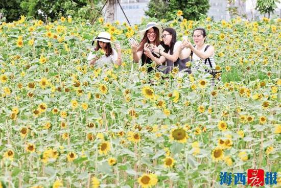 游人在向日葵花海中拍照 记者 唐光峰 摄