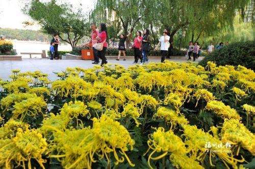  昨日,西湖菊花展布展基本完工。