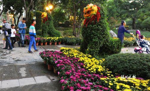 -  西湖公园内主要菊花展区可供游客欣赏了。