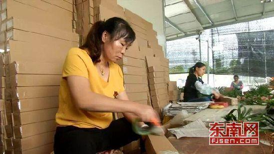 工人正对待售的兰花进行打包配货
