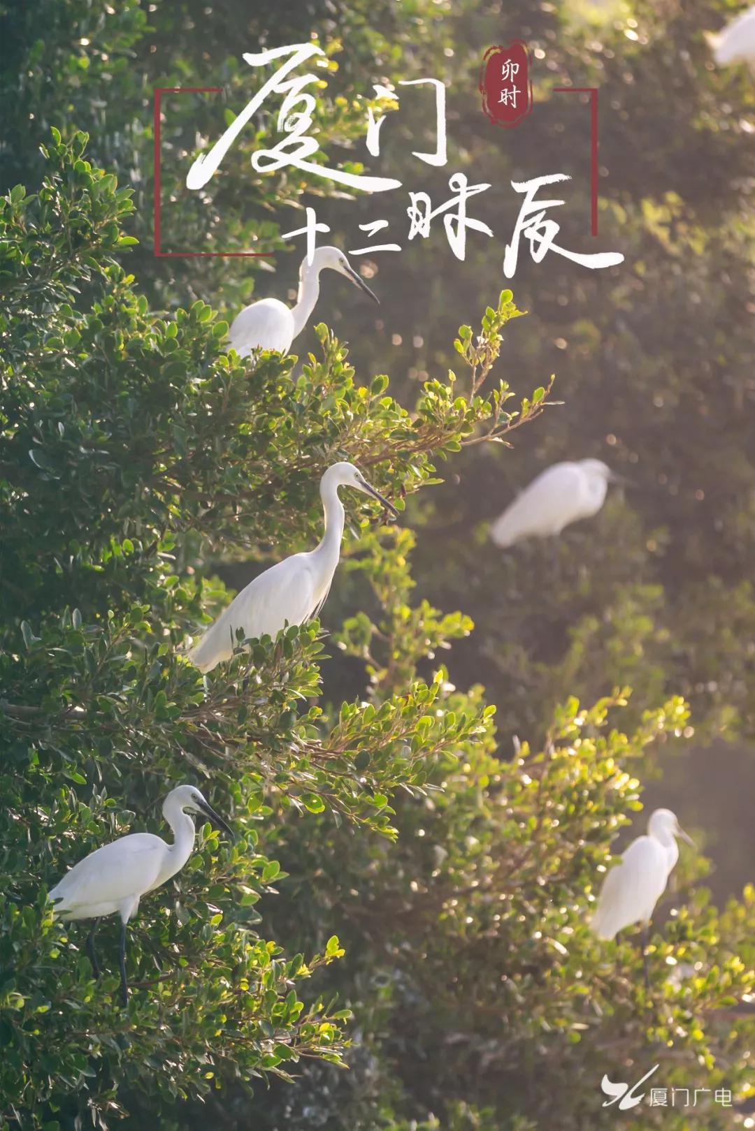 图/广电拍客双木林