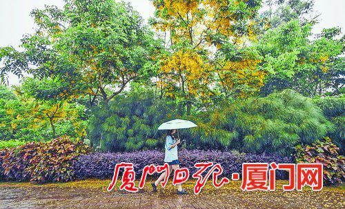 雨水拍打,黄叶飘零。(本报记者 林铭鸿 摄)