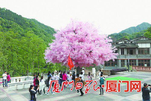游客纷纷在树下合影留念。