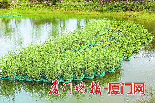 ■园内水生植物具有净化水体的作用。