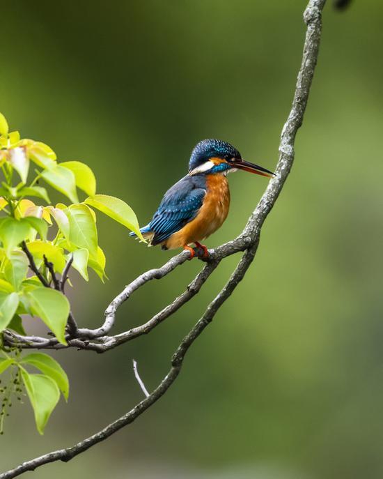 福州:西湖观鸟 生态美景