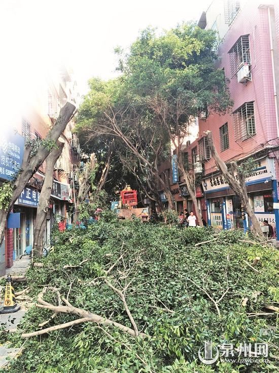 被砍下的榕树枝干直接堆在路中央