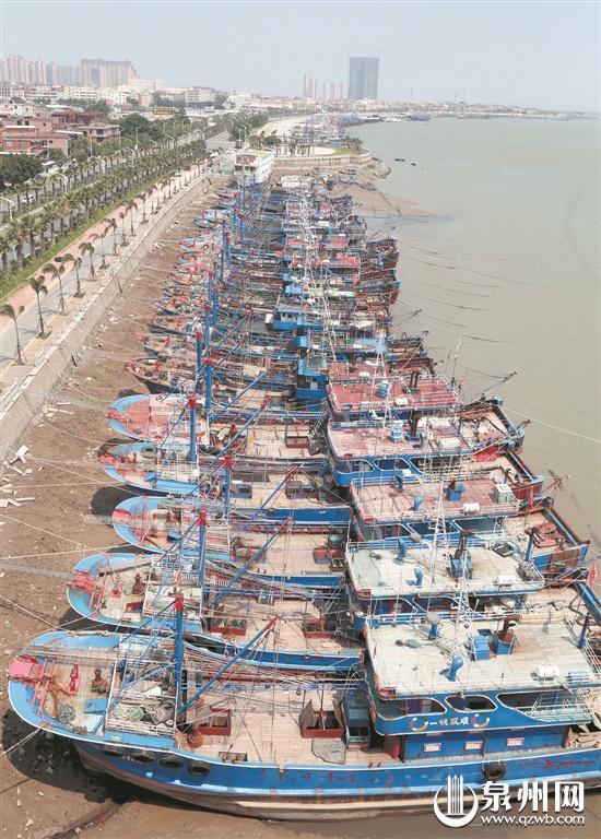 昨日,在丰泽蟳埔,避风的渔船有序停靠在码头。(张九强 摄)