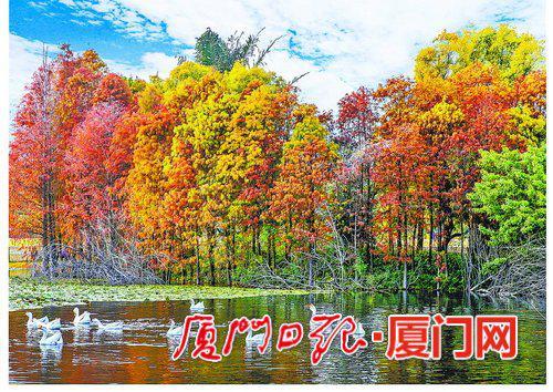红叶碧水白鹅,园博苑中的美景恰如精美壁纸,让人百看不厌。