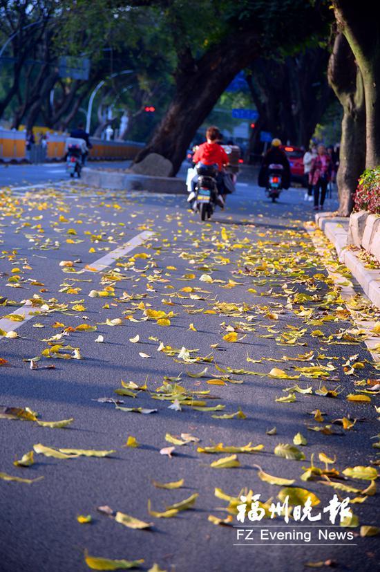 黄叶飘落到路面上。