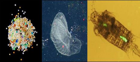 直播预告丨给西部地区孩子的一堂海洋课:厦大教授解密微塑料去哪儿了