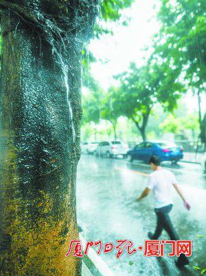 昨日上午,骤雨让路人瞬间湿身,雨水顺着树干流下,宛如一条小瀑布。(本报记者 林铭鸿 摄)