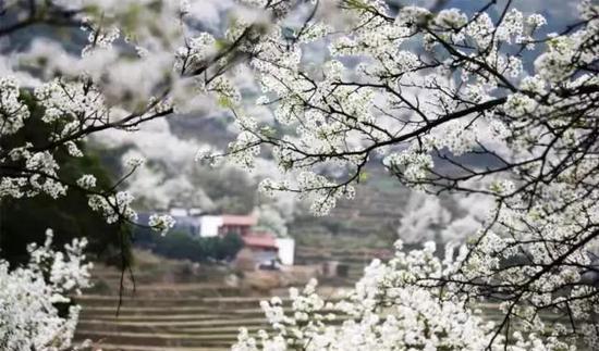 图片来源:寿宁旅游官微