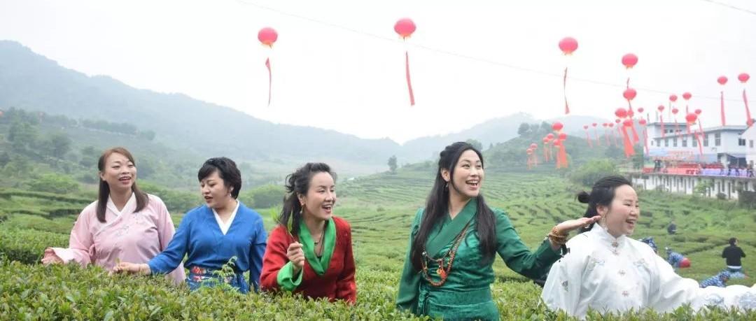 茶香四溢茶旅相融 南靖茶旅文化节开采吸引八方游客