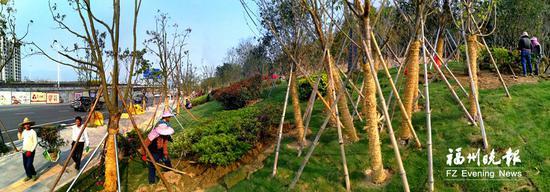 南二环与南台大道十字路口的山包上将打造樱花林。