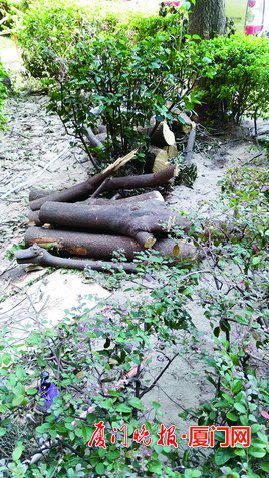 -桃源大厦内部大树被拦腰砍断。