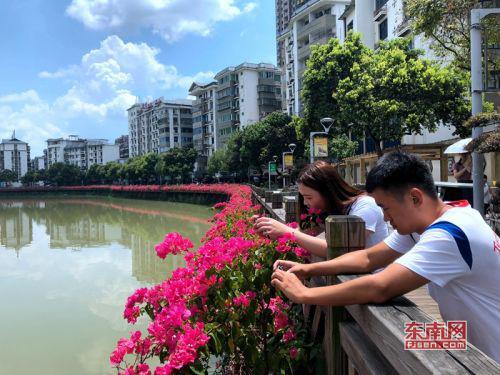 市民在河岸边给花拍照