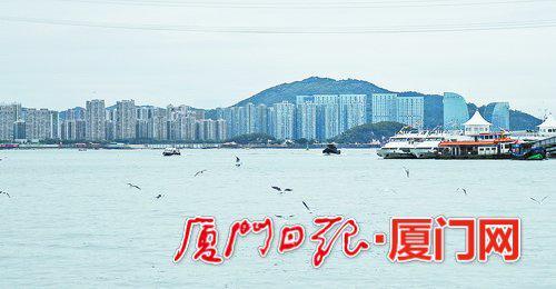 轮渡旅游客运码头附近,鸟儿正在觅食。(本报记者林铭鸿摄)