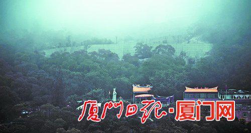 雨中的东坪山上云雾缭绕。(本报记者 林铭鸿 摄)
